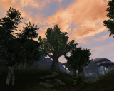 Morrowind Касьян, День 8, 18.10 0010.png