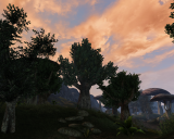 Morrowind Касьян, День 8, 18.11 0011.png