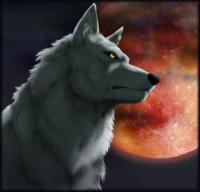 Фотография пользователя Steel Wolf