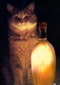 Фотография пользователя Skooma Cat